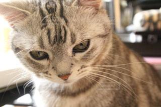 猫のアップ - No.1175407