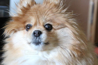 近くにカメラを見て犬のアップの写真・画像素材[1175799]