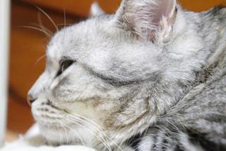 近くに猫のアップ - No.1176598
