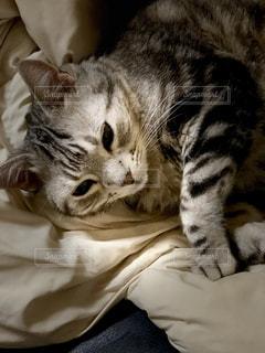 おやすみなさいの写真・画像素材[1192240]