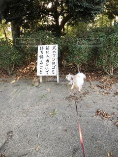 犬と看板。ウンチは持って帰ってねの写真・画像素材[1559757]