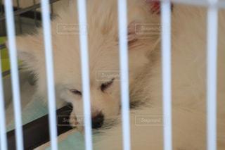ゲージの中で眠る犬の写真・画像素材[1576119]