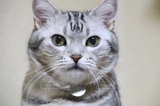 猫の顔のアップの写真・画像素材[1579502]