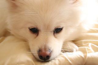 ちょっと怒っている犬の写真・画像素材[1798982]