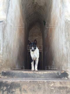 犬の写真・画像素材[374853]