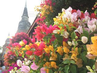 花の写真・画像素材[375368]