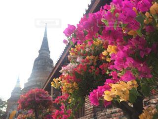 花の写真・画像素材[375369]