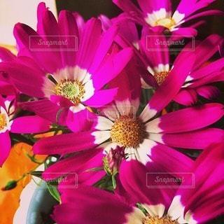 花の写真・画像素材[30685]