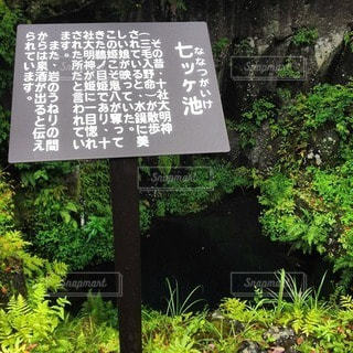森林 - No.31336
