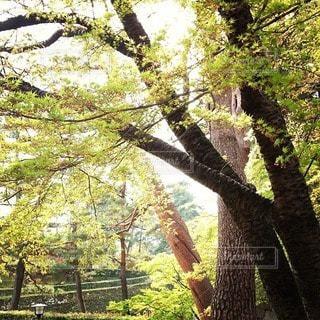 森林 - No.31496