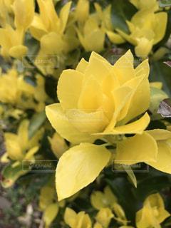 花の写真・画像素材[412302]
