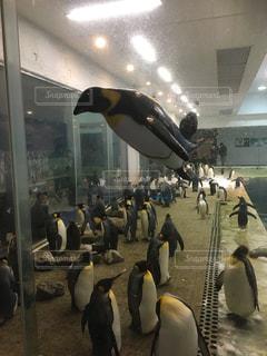 ペンギン - No.375383