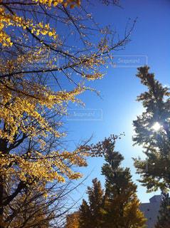自然の写真・画像素材[377533]