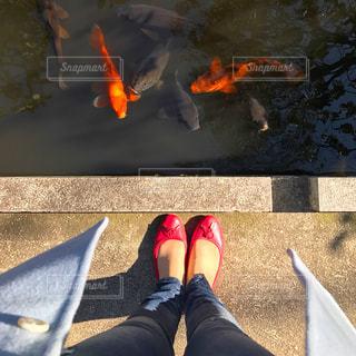 赤いパンプスを履いた女性の写真・画像素材[1200299]