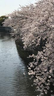 木々 に囲まれた川の写真・画像素材[1099350]