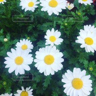 花の写真・画像素材[394263]