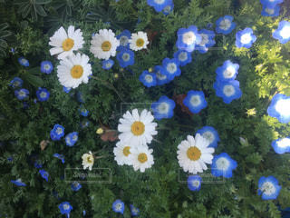 花の写真・画像素材[401622]