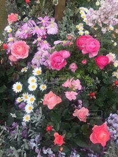 花の写真・画像素材[401628]