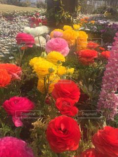 花の写真・画像素材[401635]