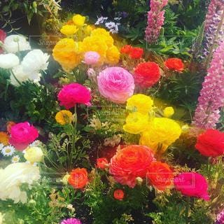 花の写真・画像素材[401781]