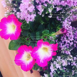 花の写真・画像素材[405582]