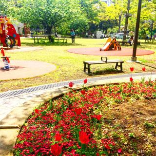 公園の写真・画像素材[453253]