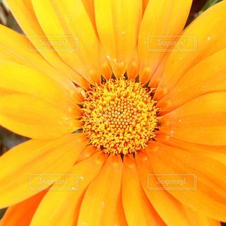 自然の写真・画像素材[589453]