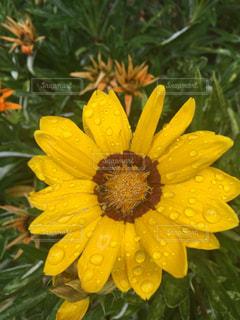 花の写真・画像素材[590594]