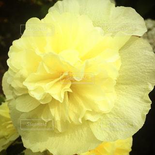 花の写真・画像素材[592608]