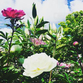 植物の花の花瓶の写真・画像素材[705923]