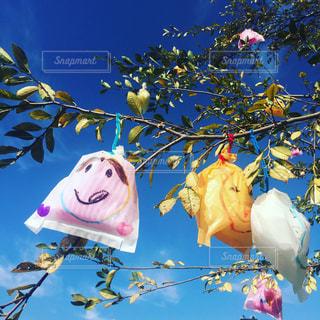 木に吊るされたかわいいやつの写真・画像素材[851930]