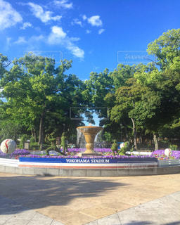 横浜スタジアムにての写真・画像素材[1036165]
