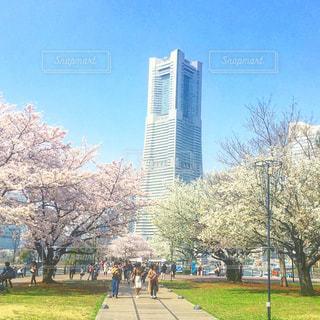 桜とランドマークタワーの写真・画像素材[1093130]