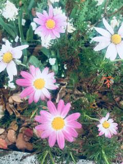 近くの花のアップの写真・画像素材[1145348]