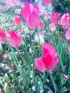 近くの花のアップの写真・画像素材[1145350]