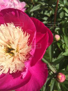 植物にピンクの花の写真・画像素材[1145955]