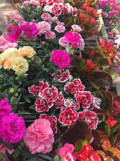 近くの花のアップの写真・画像素材[1145956]