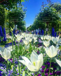 白い花たちの写真・画像素材[1145963]