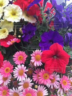 近くの花のアップの写真・画像素材[1145976]