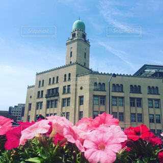 ピンクの花は建物の前に立っています。の写真・画像素材[1145979]