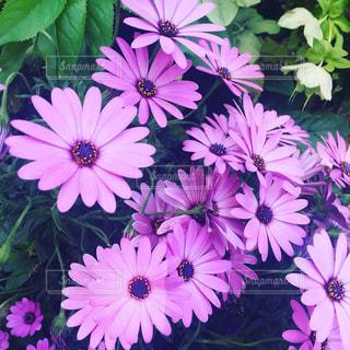 近くの花のアップの写真・画像素材[1145990]
