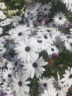 近くの花のアップの写真・画像素材[1145994]