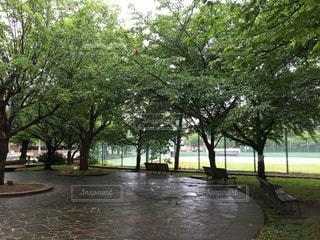 公園 - No.375219