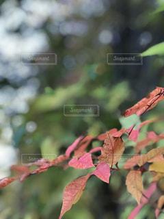 秋の始まりの写真・画像素材[799857]