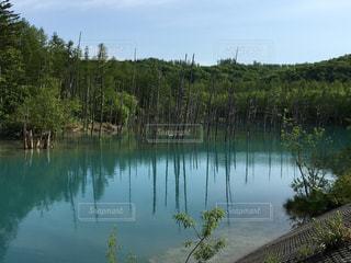 池の写真・画像素材[376385]