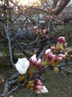 花の写真・画像素材[375519]