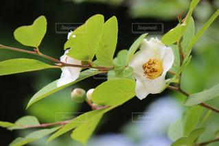 花の写真・画像素材[378011]