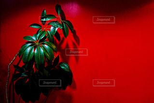 植物 - No.378789