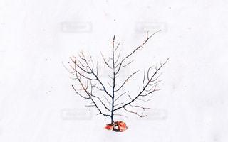 サンゴ - No.378845