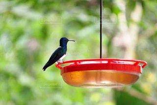 鳥の写真・画像素材[571004]